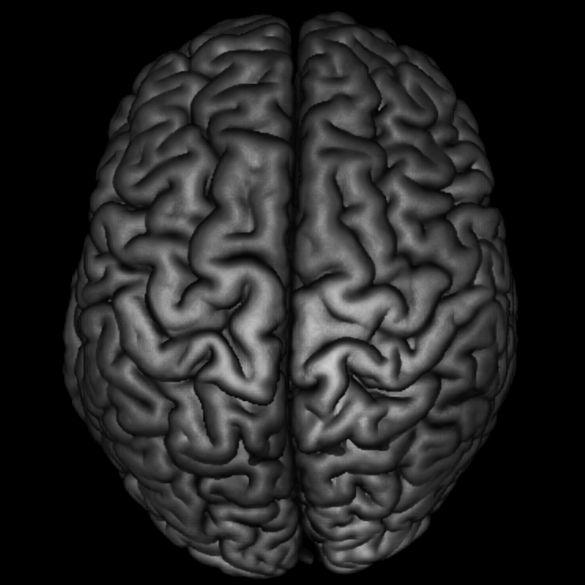 Neuroanatomy And Brain Evolution