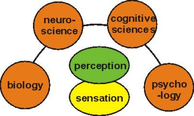 Sensory Perception Essay